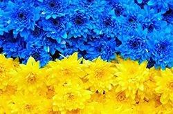 Всеукраїнський експеримент